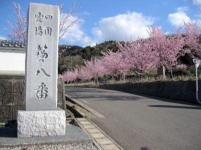 巡015:8番熊谷寺から11番藤井寺...